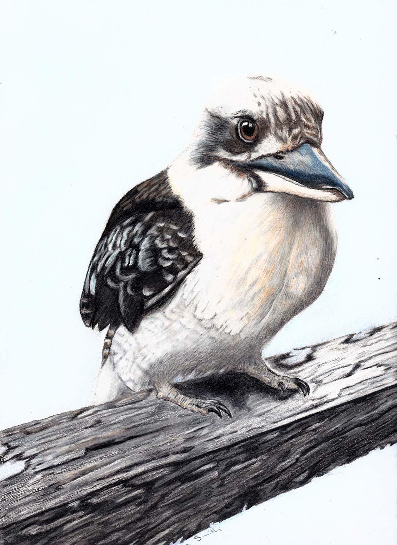 Anna-Smith-Kookaburra