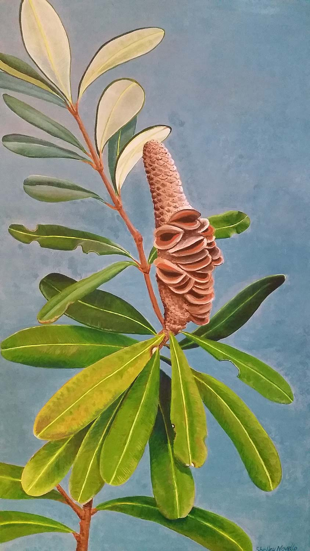 Headland Banksia