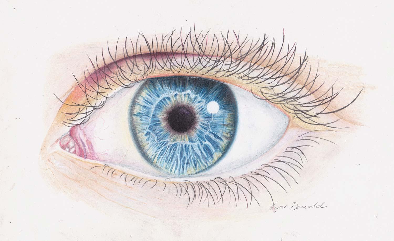Coloured Pencil Course Sunshine Coast - I've Got My Eye On You