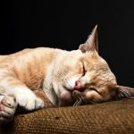 10 human foods that are poisonous to pets