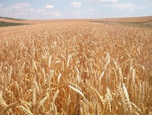 Building For Storing Wheat