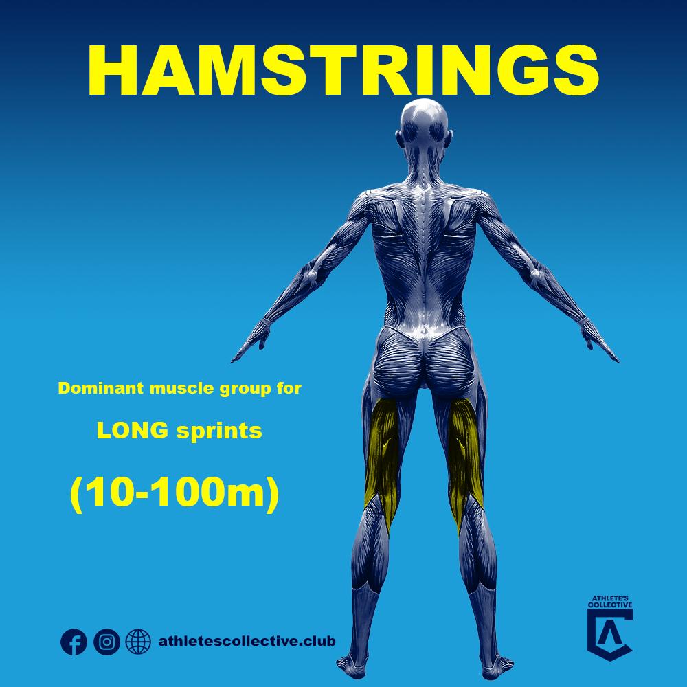Hamstrings (Improve Sprint Speed