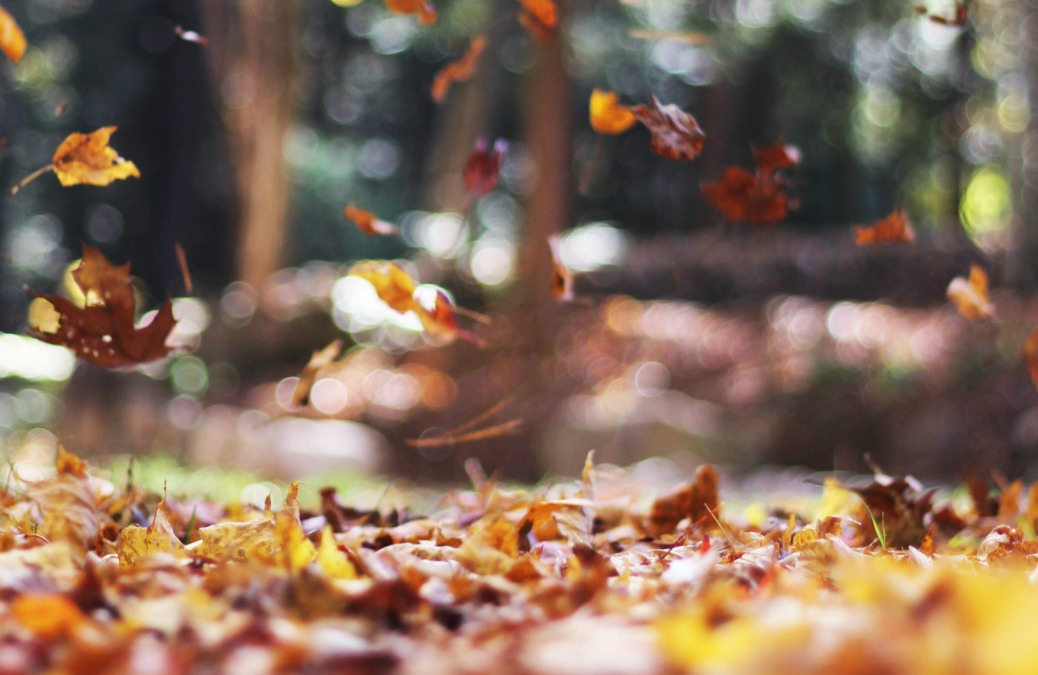 15 Interesting Things To Do This Autumn