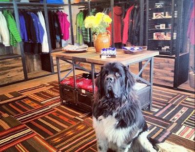 Shop dogs in Colorado