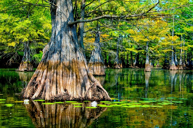 Must see while in Louisiana