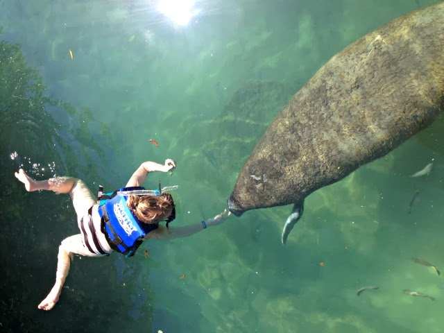 New Things: Swim With A Manatee