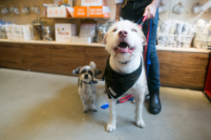 What would it be like to open your own dog cafe?! A dream? A Department of Health nightmare? Both? Click through for one dog-lover's business story!