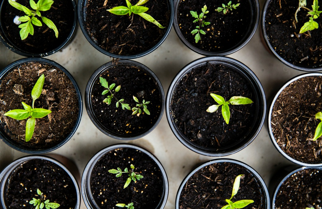 Plant a seed for Future You + 9 ideas to get you started