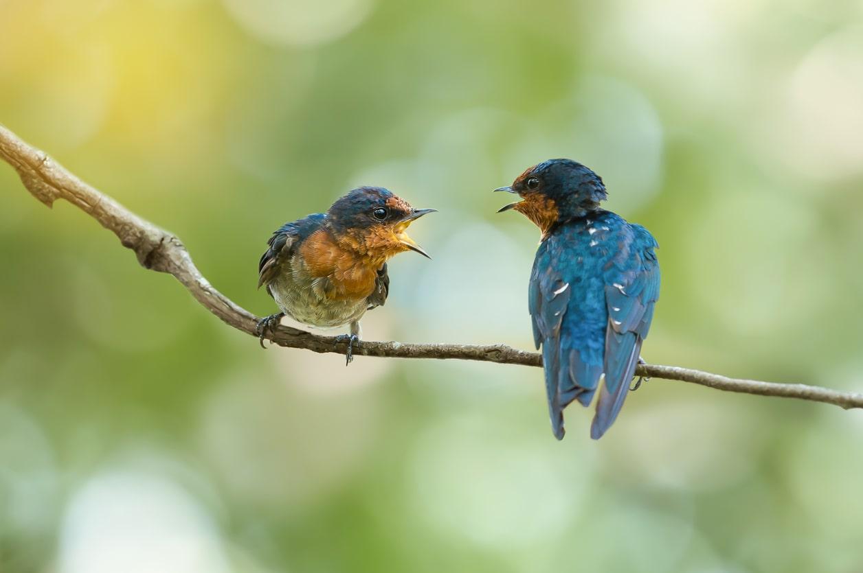 couple-of-birds-communicating