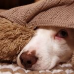 Anxious-puppy-hiding-under-blanket
