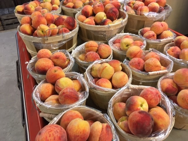 now have red haven peaches!