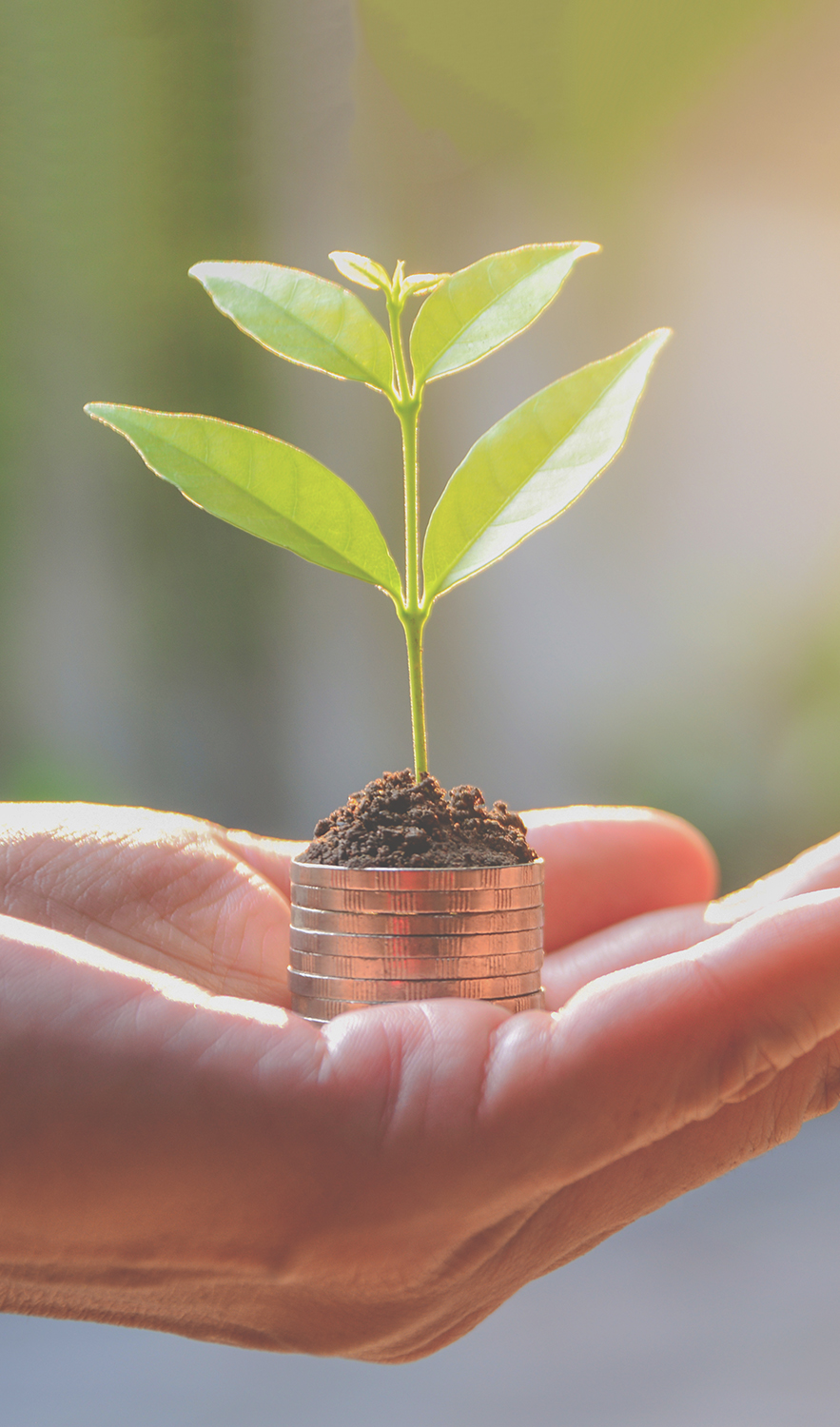 Concept of money with plant growing from coins in hand. Financial and save money concept.
