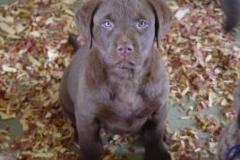 1_puppy_pic_2_08-268x208