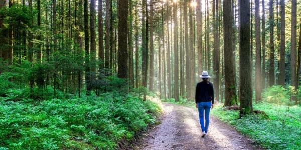walk on path through trees
