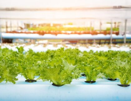 Reasons You Should Start a Hydroponic Garden