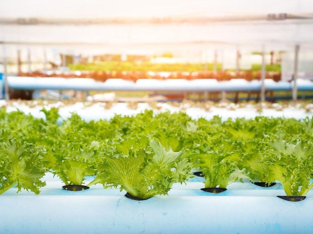 Reasons You Should Start a Hydroponic Garden