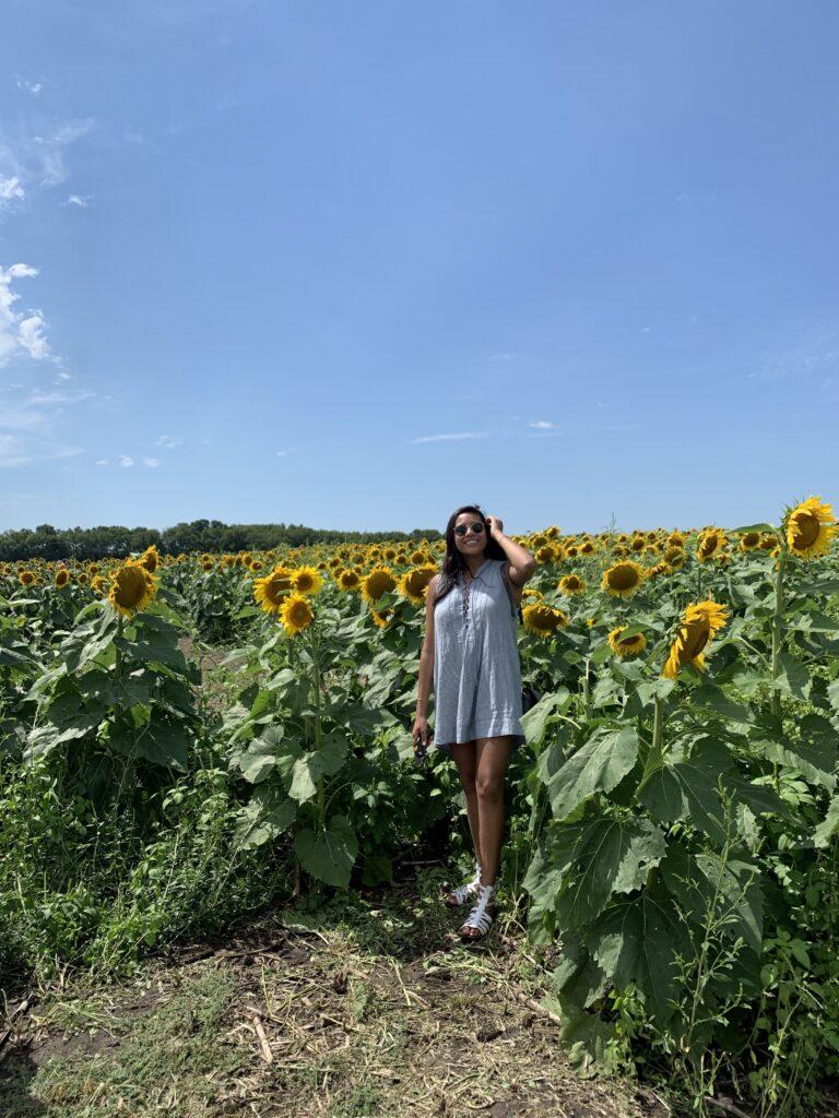 z-sunflower