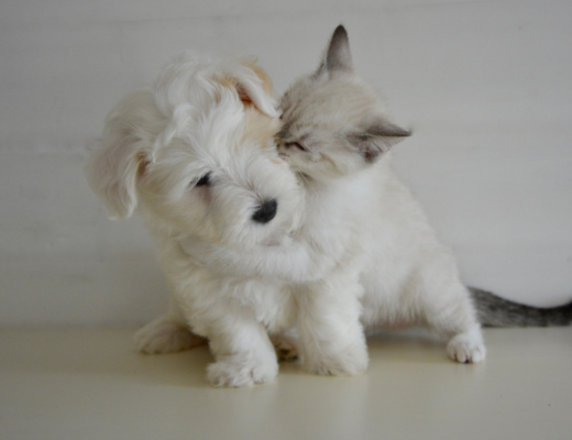 A new puppy and kitten playing together