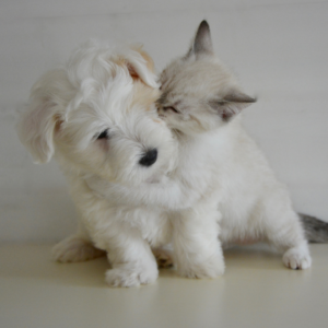 Bringing home a new puppy and kitten