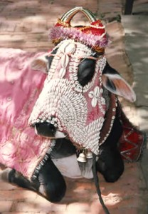 Photo sourced from http://cattle-cow-bovine.information-and-facts.com/importance-of-cows-in-india/