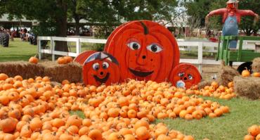 Pumpkins2-1