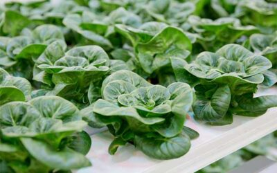 """HortiDaily: AgTech impacts on """"future of food"""" — webinar"""