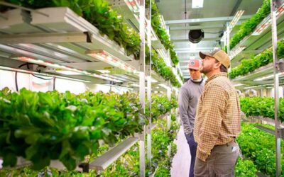 PR Newswire: AmplifiedAg® Increases Better Fresh Farms Production 50% with New Indoor Farm and AmpEDGE Operating System