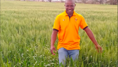 Photo of Interview With Masimba Maimba , Young Zimbabwean Commercial Farmer