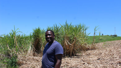 How Second Generation Sugar Cane Farmer Is Keeping His Father's Legacy Alive