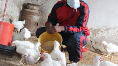 Young Farmer Receives Over R40 000 In Donations In 3 Days After Losing R50 000 Worth Of Broilers
