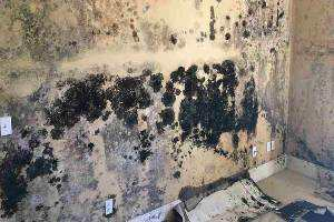 mold removal remediation company