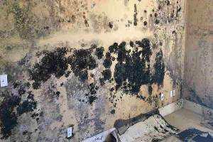 mold removal remediation company