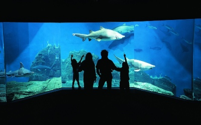 stamford aquarium