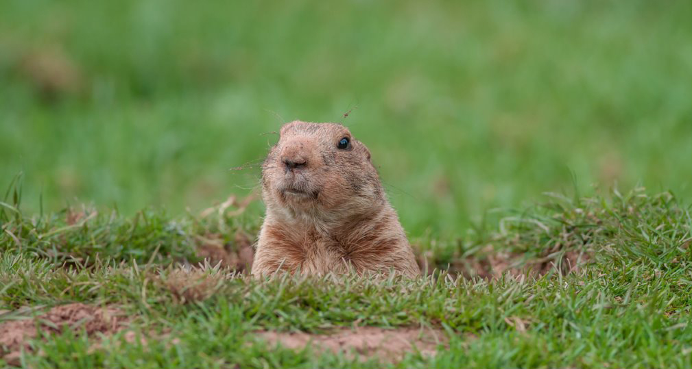 Don't let your workday be Groundhog Day