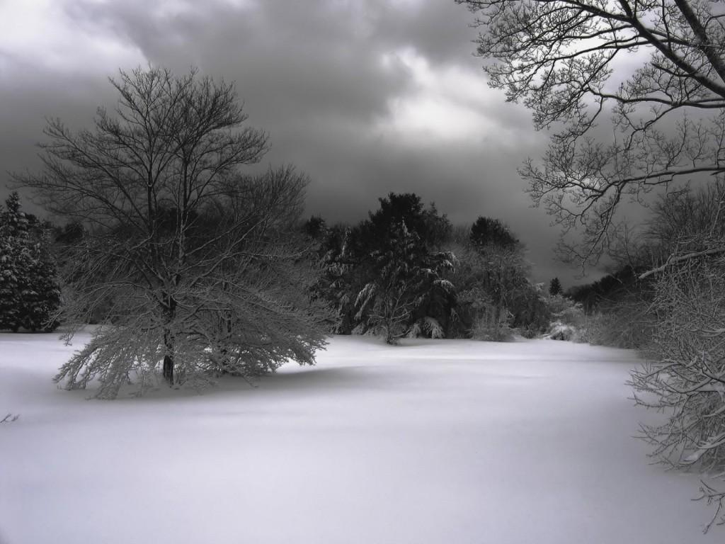 Winter Tale Dark Snow