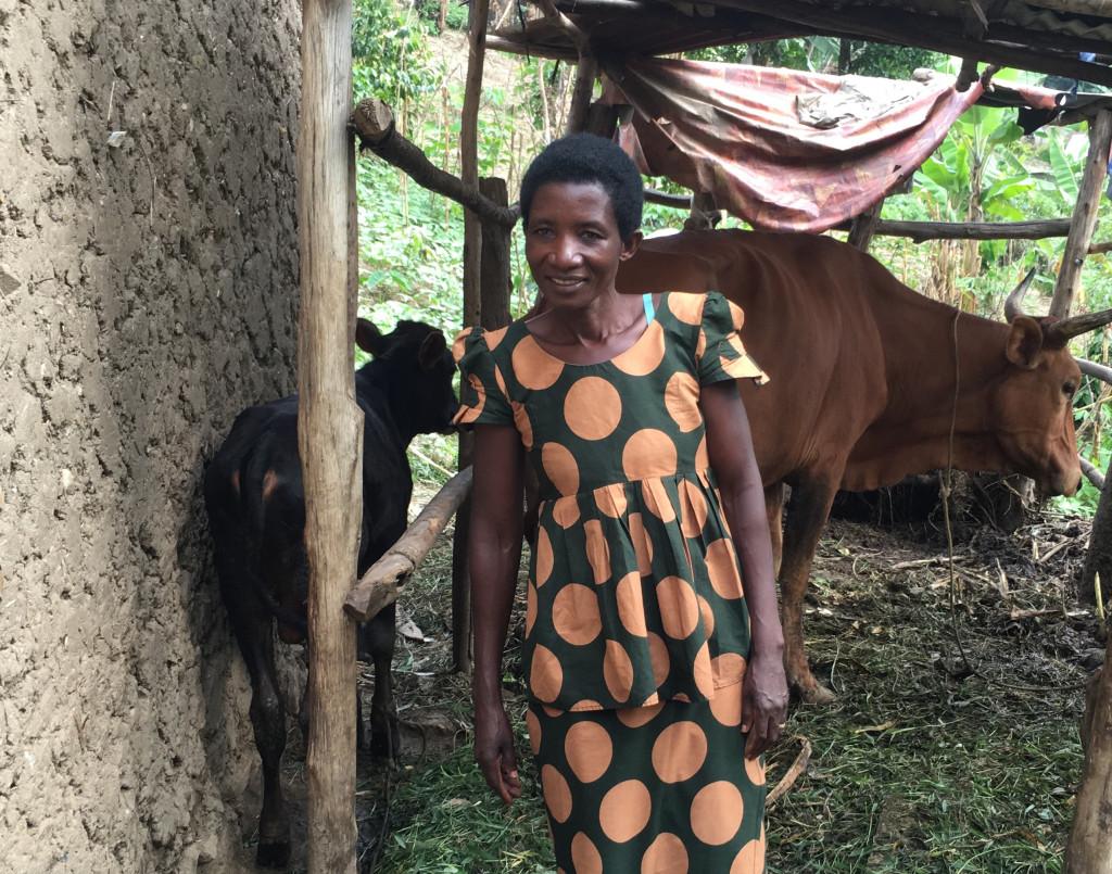 Elana and Cows