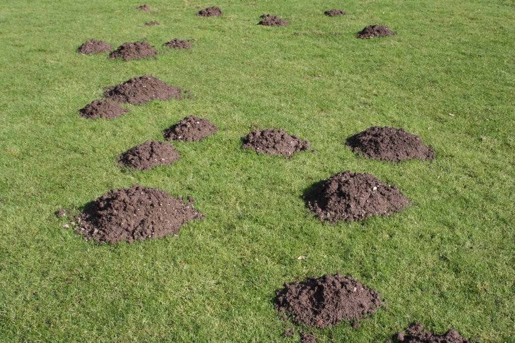 Butter mole-hill-1