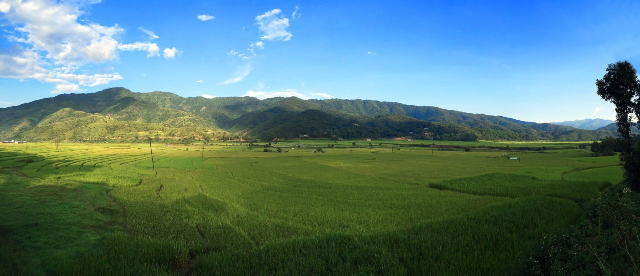 Rice fields of Senapati