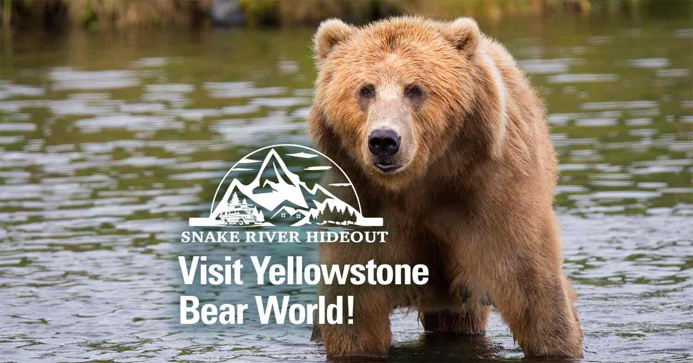Get Up Close to Wildlife at Yellowstone Bear World