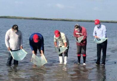 Inicia el rescate de larva de camarón en  Playa Colorada