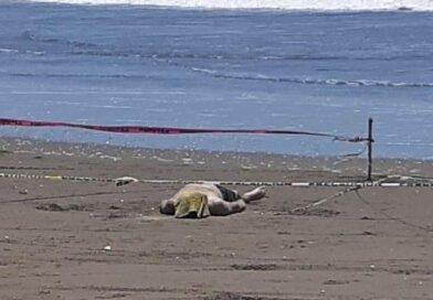 Muere un guamuchilense en playa Las Glorias