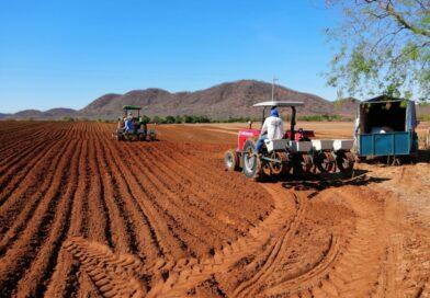 Lluvia pone a sembrar a los cacahuateros de Mocorito