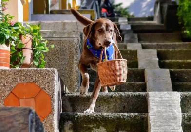 Asaltan a perrito que ayuda a repartir víveres