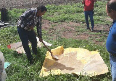 Capacitan a productores para curar la semilla de forrajes