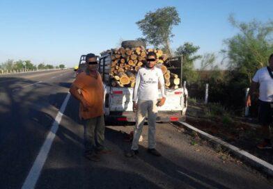 Policía Ambiental detiene a dos sujetos que talaban clandestinamente árboles