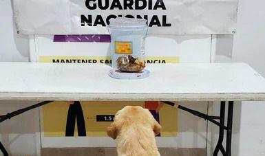 En chamoy transportaban crystal, lo halla binomio canino de Guardia Nacional