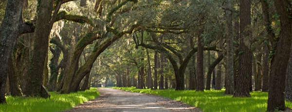 Path-through-Forest-by-Vanessa-Kauffmann