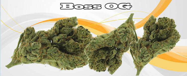Boss OG Banner