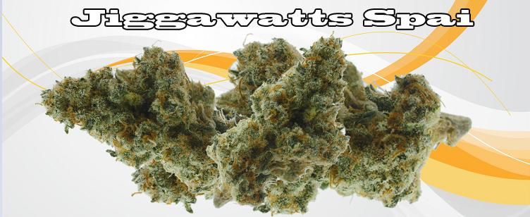 Jiggawatts Spai Banner