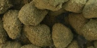 Moon Rocks Peach